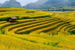 Campo Terraced do arroz em Vietname Fotografia de Stock Royalty Free