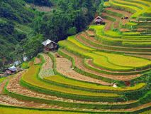 Campo Terraced do arroz, MU Cang Chai Vietnam Foto de Stock