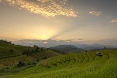 Campo Terraced verde do arroz durante o por do sol em Pa Bong Peay da proibição em C Fotografia de Stock Royalty Free