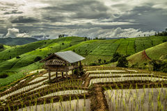 Campo terraced verde surpreendente do arroz Fotografia de Stock