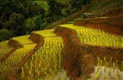 Campo terraced verde surpreendente do arroz Fotos de Stock