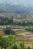 Campo a terrazze di azienda agricola in Cina del sud Fotografia Stock