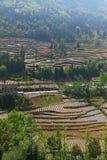 Campo a terrazze di azienda agricola in Cina del sud Fotografia Stock Libera da Diritti