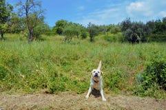 Campo toscano Foto de archivo libre de regalías
