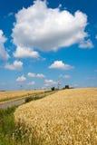 Campo trito e ritrito giallo con cielo blu e le nuvole bianche nell'agricoltura ceca di estate - agricoltura ecologica e cereale Fotografie Stock Libere da Diritti