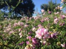 Campo ucraniano com wildflowers bonitos Fotos de Stock Royalty Free