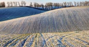 Campo uma manhã pitoresca do inverno em um campo montanhoso imagens de stock