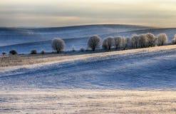 Campo uma manhã pitoresca do inverno em um campo montanhoso fotos de stock