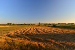 Campo in un tramonto Fotografia Stock