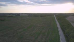 Campo unharvested verde ancho y carretera larga contra bosque almacen de metraje de vídeo