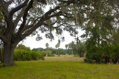Campo vacío con los árboles, el musgo y las palmas foto de archivo libre de regalías