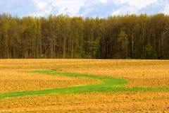 Campo variopinto con la linea di albero Immagine Stock