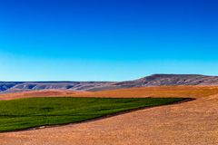 Campo vasto oriental da colheita do deserto da extensão de Washington Palouse foto de stock royalty free