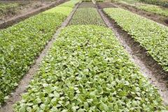 Campo vegetal Imagen de archivo libre de regalías