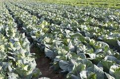 Campo vegetal imagens de stock