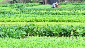 Campo vegetal Fotos de archivo
