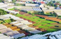 Campo vegetal en la laca Duong Foto de archivo libre de regalías