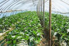 Campo vegetal vasto Fotografia de Stock