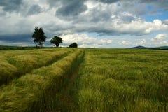 Campo in vento fotografia stock libera da diritti