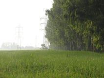 Campo verde Immagini Stock Libere da Diritti