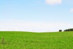 Campo verde Fotos de Stock