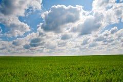 Campo verde Fotografie Stock Libere da Diritti