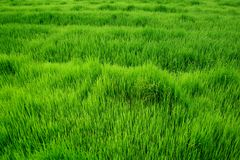 Campo verde Imagen de archivo