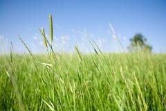 Campo verde immagine stock libera da diritti