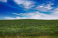 Campo verde Immagine Stock