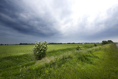 Campo verde Foto de archivo