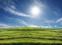 Campo verde Fotografía de archivo libre de regalías