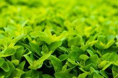 Campo verde Fotografia Stock