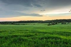 Campo verde Fotos de archivo libres de regalías