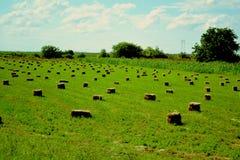 Campo verde Foto de archivo libre de regalías
