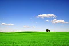 Campo verde Foto de Stock Royalty Free
