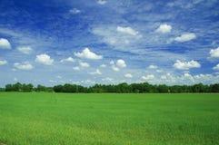 Campo verde Fotografia de Stock Royalty Free
