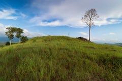 Campo verde Imagem de Stock