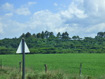 Campo verde fotos de archivo