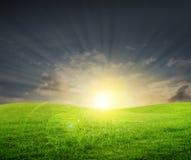 Campo verde al tramonto fotografia stock libera da diritti