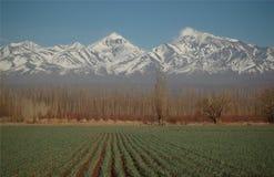 Campo verde antes de tapas nevadas de la montaña Fotografía de archivo
