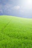 Campo verde bajo el cielo azul de la nube Foto de archivo