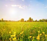 Campo verde bajo el cielo nublado azul con el sol Imagen de archivo libre de regalías