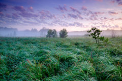 Campo verde bonito Fotografia de Stock Royalty Free
