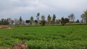 Campo verde bonito e céu nebuloso Imagem de Stock