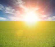 Campo verde bonito em um nascer do sol fotografia de stock