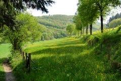 Campo verde cénico Fotografia de Stock Royalty Free