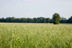 Campo verde, céu azul Imagem de Stock Royalty Free