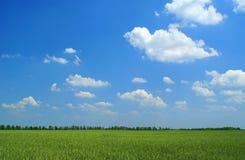 Campo verde, céu azul e nuvens brancas Imagem de Stock Royalty Free