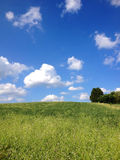 Campo verde, cielo azul Fotografía de archivo libre de regalías