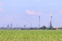 Campo verde claro con la refinería del maíz y de petróleo Imágenes de archivo libres de regalías